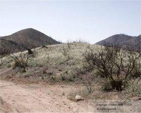 Hill with Wildflowers, Cuyamaca Rancho State Park, 6 Months Later