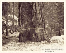 Double Self-Portrati with Medium-sized Sequoia, Yosemite National Park