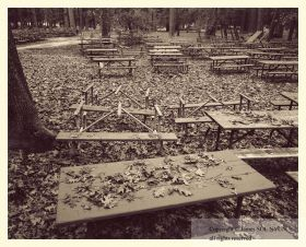 Salvaged Picnic Tables, Yosemite National Park