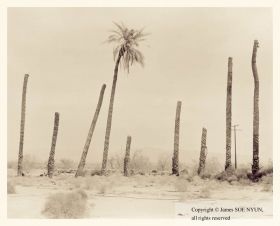 Palms II, Desert Center, California