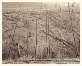 Burned Slope I, 20 Years after Yellowstone Fire, Yellowstone National Park