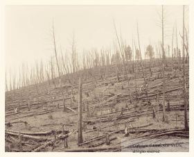 Burned Slope II, 20 Years after Yellowstone Fire, Yellowstone National Park